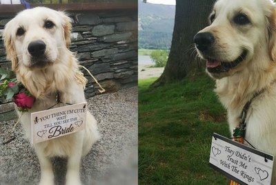 19 Dogs Stealing The Spotlight At Weddings