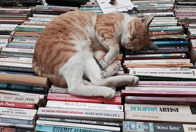 16 Pets Who Think Books Are Dumb