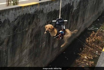 Mad Scientist Rescues Puppy Trapped In Storm Drain With Improvised Drone