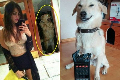 21 Dogs Who Aren't Here To Meet Your Expectations