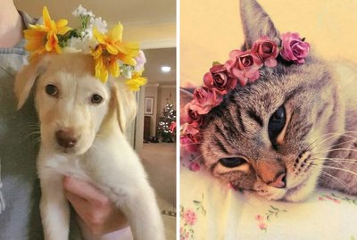 18 Animals Dressed Up For Spring