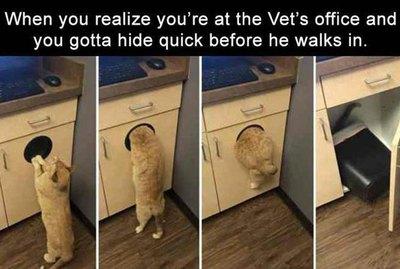 18 Pet Memes To Bring You Joy