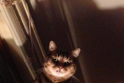 17 Pets Who Think They're In A Horror Movie