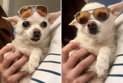 These 18 Pets Looking Fabulous In Sunglasses Will Shade Your Heart From Sunburns