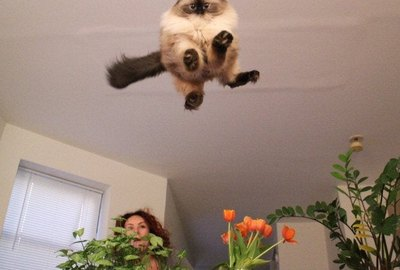 19 Cats And Dogs Who Have Perfected Being Cats And Dogs