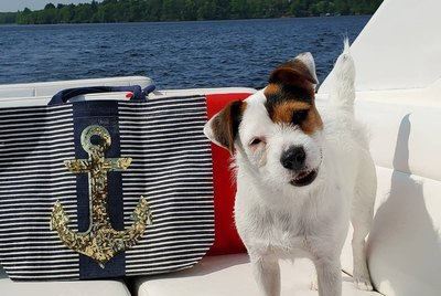 Sail Away To Your Happy Place With 21 Dogs On Boats