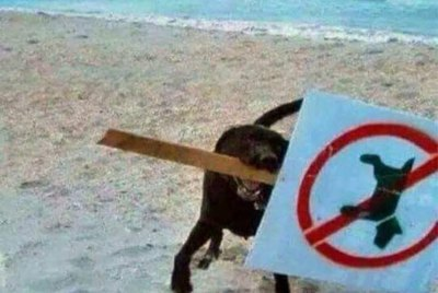 "19 Of The Funniest Dogs Reacting To The ""No Dogs Allowed"" Meme"