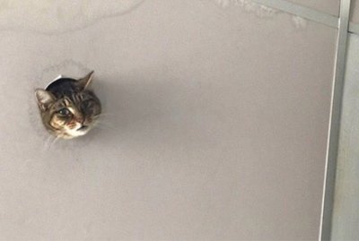 Classic Meme Gets New Life When Cat Pokes Head Through Hole In Ceiling