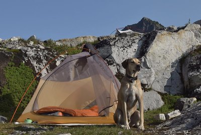 18 Dogs on Camping Trips