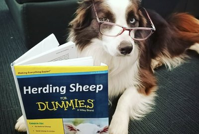 18 Dogs Who Are Bibliophiles