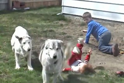 20 Pets Knocking Over Kids