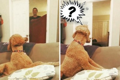 The 12 Most Insane Dog Reactions To The 'What The Fluff' Challenge