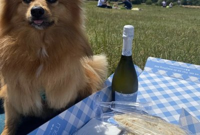 24 Dogs Having Fun at Picnics
