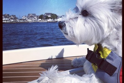 17 Dogs Enjoying Life on Boats