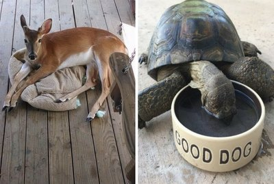 These 17 Very Unusual Dogs Would Like You To Pet Them Please