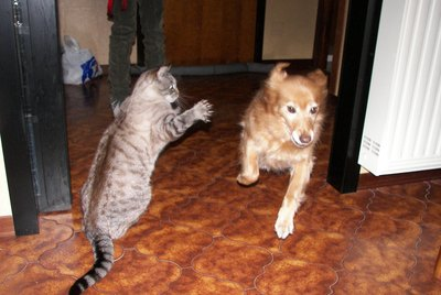 These 27 Photos Of Dogs Getting Pounced On By Cats Prove Kitties Have Issues
