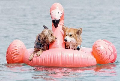 Just 21 Dogs Doin' Themselves A Pool Float