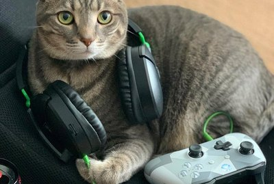17 Cats That Are Hardcore Gamers