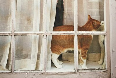 26 Cats Just Hanging Out In Windows
