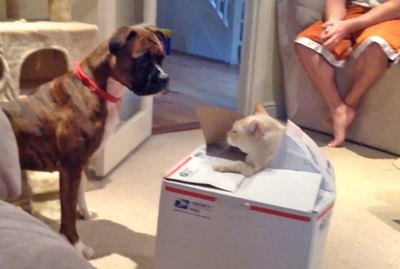 21 Hilarious Pranks Pulled By Cats & Dogs