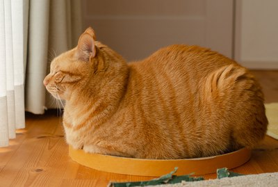 20 Cats Who Look Like Loaves Of Bread