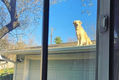 21 Dogs Just Hanging Out On Roofs For Some Reason