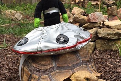 "Turtles & Tortoises in ""Costumes"" Are Our New Obsession"