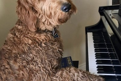 17 Dogs Playing Piano to Brighten Your Week