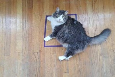 Why Will Cats Sit in Any Square or Circle, Even if it's Just Tape?