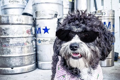 17 Dogs Looking Cool in Sunglasses