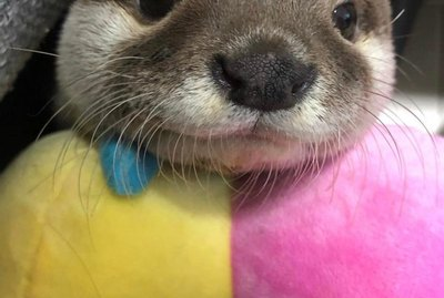 19 Adorable Otters You Really Otter Take A Look At