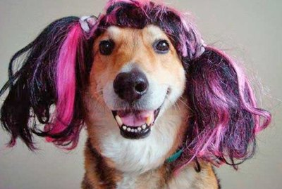 18 Dogs in Wigs Guaranteed to Make Your Mouth Laugh