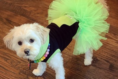 17 Dogs Looking Pretty in Tutus
