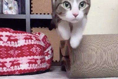 10 Slo-Mo Pet Videos That You'll Want To Watch on Repeat Forever & Ever