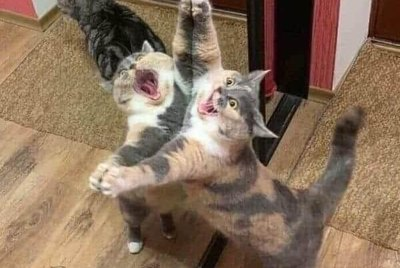 Cats vs Mirrors: The Ultimate Showdown