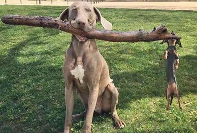 These 21 Photos Prove Dogs Are the Best Branch Managers and Assistant Branch Managers