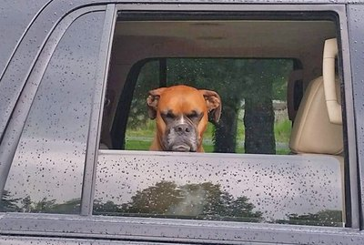 18 Cats and Dogs Who Are So Over It Right Now