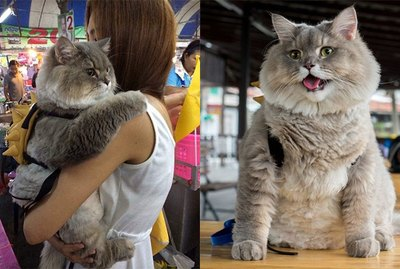 Just 24 Delightfully Chubby Cats