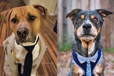 Just 20 Photos of Dogs Wearing Ties
