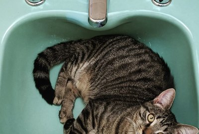 19 Cats Happily Chilling in Sinks