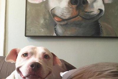 18 Pictures of Dogs Guaranteed To Make You Chuckle