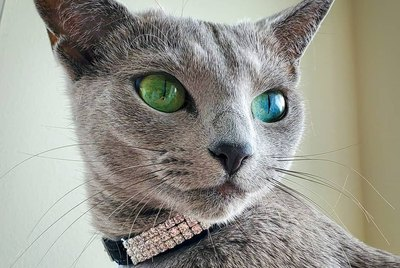 19 Cats That Should Be Supermodels