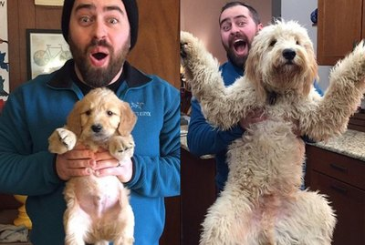 20 Cutest Pictures of Puppies in Their Final Form
