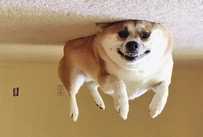 20 Dogs Who Are Actually Just Furry Balloons