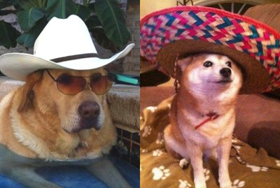 Just 21 Dogs Looking Rad in Hats