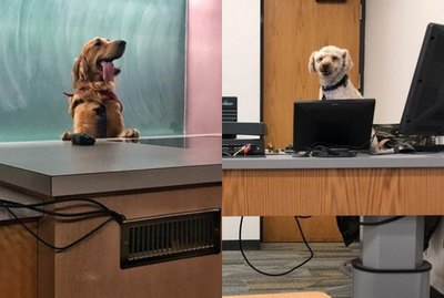 16 Pets Who Are Stoked to be Heading Back to School