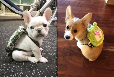 Just 20 Puppies Wearing Backpacks