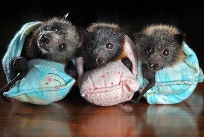 19 GIFs & Photos That Will Turn How You Think About Baby Bats Upside Down