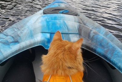 18 Cats Having Super Exciting Adventures