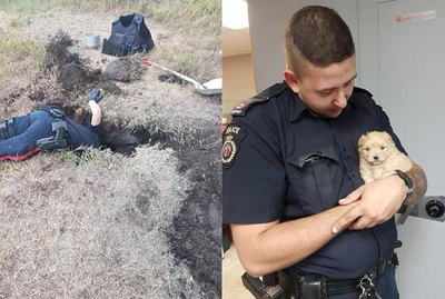 Police Spend Hours Digging Up Puppies Trapped in a Tunnel